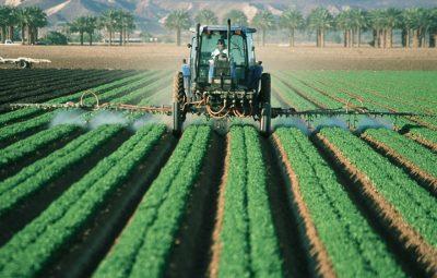 """Colpo per l'industria del pomodoro, virus """"altamente contagioso"""" arriva in Olanda"""